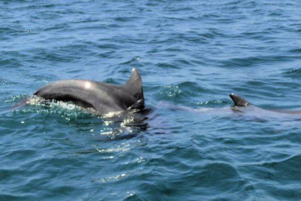 notojima-dolphin-n