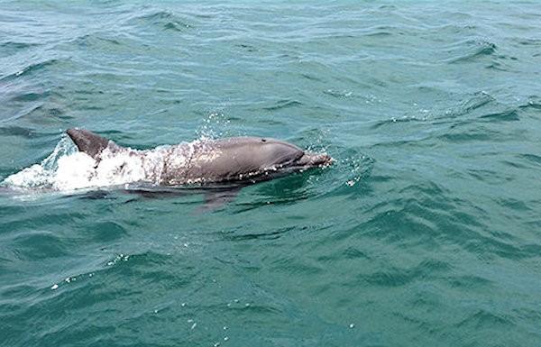 notojima-dolphin-p