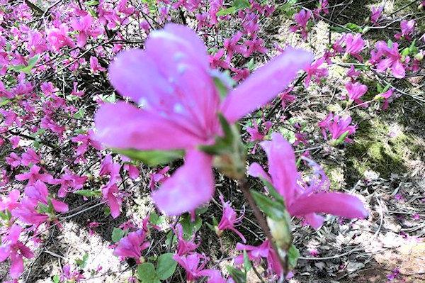 noto-botanical-gardens-1s