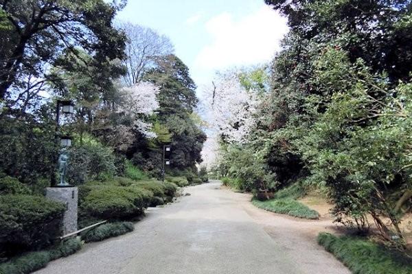 hakutyouro-sakura-a
