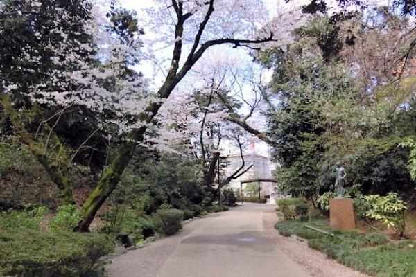 hakutyouro-sakura-c
