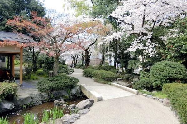 hakutyouro-sakura-e