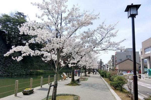 hakutyouro-sakura-f